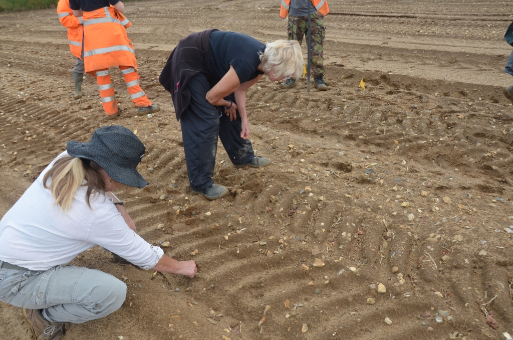 two people picking up objects in sandy field